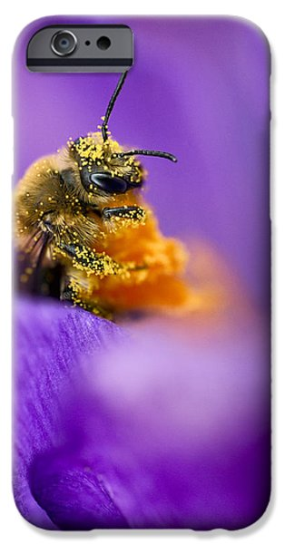 Close Up Floral iPhone Cases - Honeybee Pollinating Crocus Flower iPhone Case by Adam Romanowicz