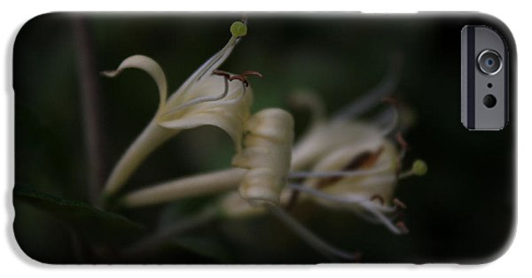 Fog Mist iPhone Cases - Honeysuckle Mist iPhone Case by Sherry Grochmal