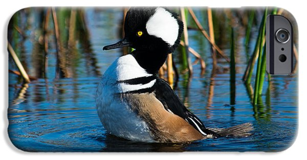 Explore Pyrography iPhone Cases - Hooded Merganser iPhone Case by Michael Bennett