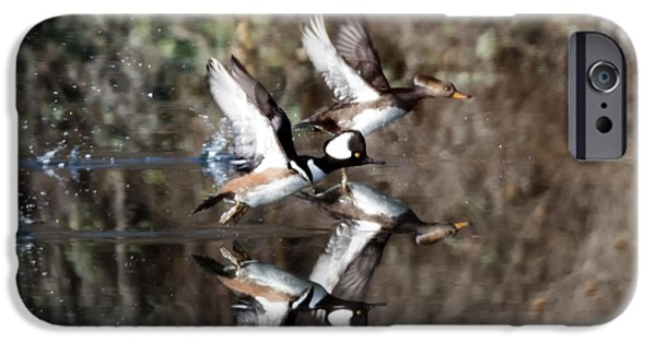 Flight iPhone Cases - Hooded Merganser Mirror iPhone Case by Mike Dawson