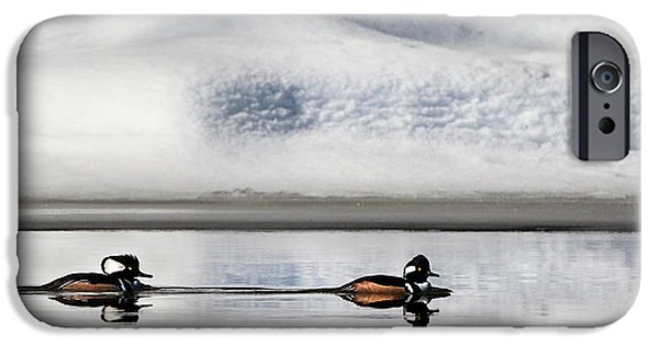 Reflections Photographs iPhone Cases - Hooded Mergansers iPhone Case by Bill  Wakeley