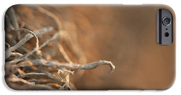 July iPhone Cases - Hooked iPhone Case by Anne Gilbert