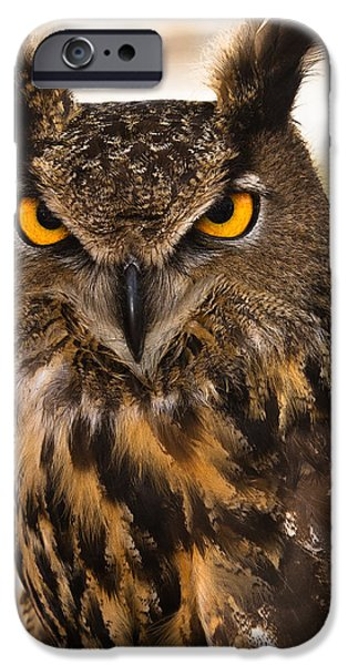 Arkansas iPhone Cases - Hoot iPhone Case by Annette Hugen