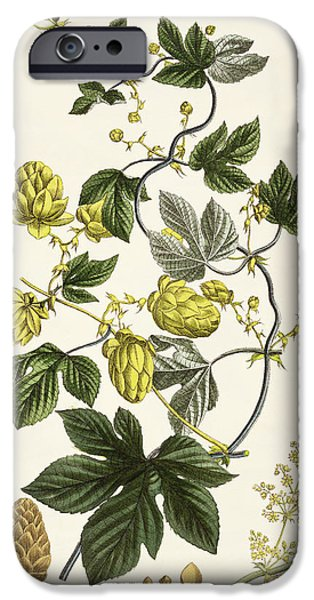 Petals Drawings iPhone Cases - Hop Vine From The Young Landsman iPhone Case by Matthias Trentsensky