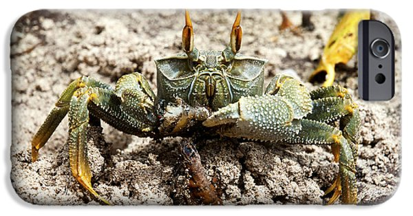 Fauna iPhone Cases - Horned ghost crab iPhone Case by Fabrizio Troiani