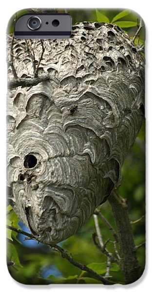 Hornets Nest iPhone Cases - Hornet Nest iPhone Case by James Peterson