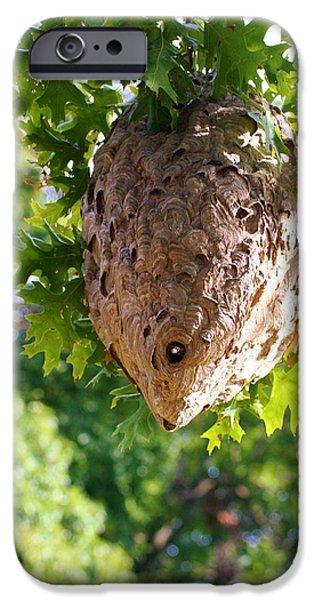 Hornets Nest iPhone Cases - Hornets Nest iPhone Case by Karen Silvestri