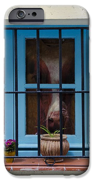 Horse behind the window iPhone Case by Victoria Herrera