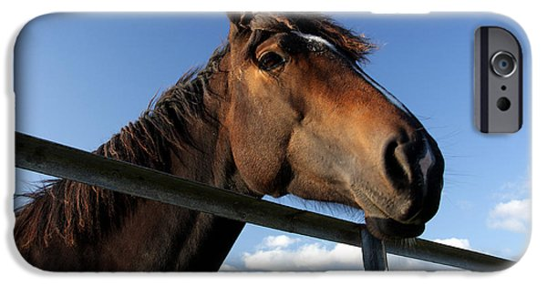 Horse Racing Photographs iPhone Cases - Horse By The Gate iPhone Case by Aidan Moran