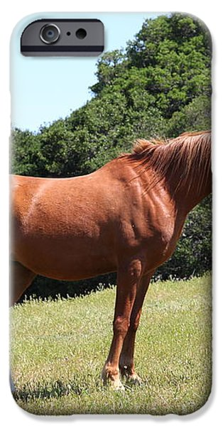 Horse Hill Mill Valley California 5D22683 iPhone Case by Wingsdomain Art and Photography