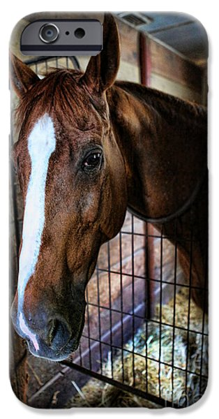 Equestrian Center iPhone Cases - Horse in a Box Stall - Horse Stable iPhone Case by Lee Dos Santos