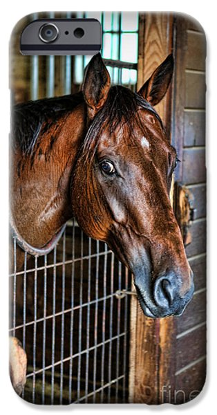 Equestrian Center iPhone Cases - Horse in a Box Stall II - Horse Stable iPhone Case by Lee Dos Santos