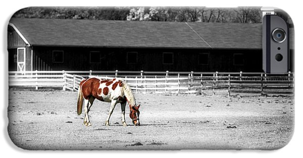 Selective Coloring Art iPhone Cases - Horse iPhone Case by John Rizzuto