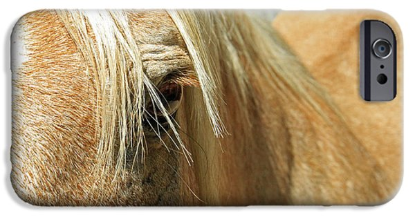 Horse Pyrography iPhone Cases - Horse Looks iPhone Case by Shoal Hollingsworth