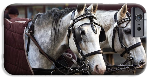 Horse And Buggy Photographs iPhone Cases - Horse Portrait in Vienna iPhone Case by John Rizzuto