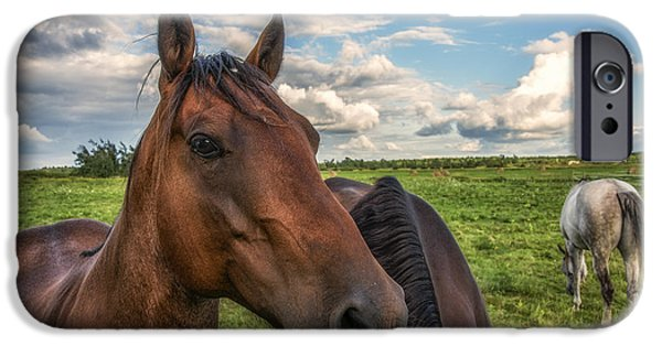 American Quarter Horse iPhone Cases - Horse Profile iPhone Case by Mark Papke