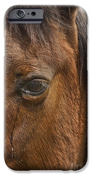 Corporate Photographs iPhone Cases - Horse Tear iPhone Case by James BO  Insogna