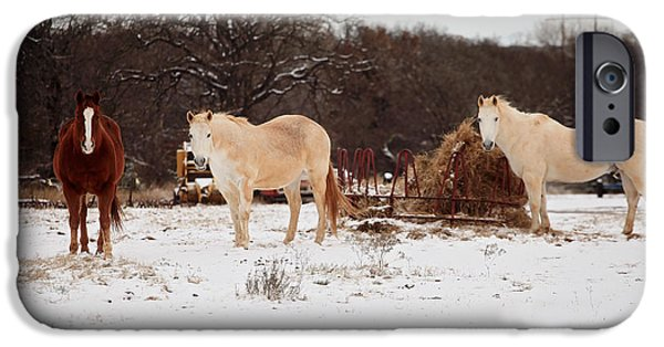 Roping Horse iPhone Cases - Horse trio in the snow iPhone Case by Toni Hopper