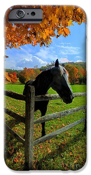 Horse under tree by fence iPhone Case by Dan Friend