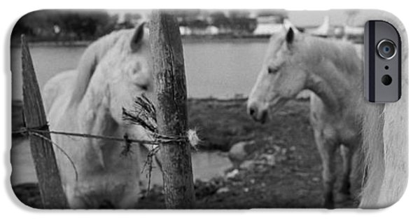 Horse iPhone Cases - Horses, Camargue, France iPhone Case by Panoramic Images