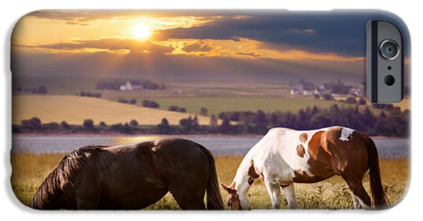 Field. Cloud iPhone Cases - Horses grazing at sunset iPhone Case by Elena Elisseeva