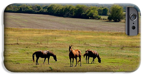 Sign iPhone Cases - Horses Grazing iPhone Case by Deborah Berry