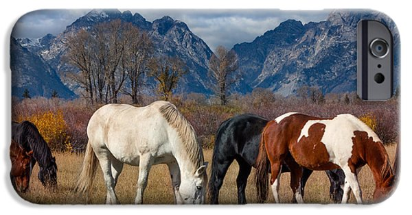 Fed iPhone Cases - Horses Grazing in the Grand Tetons iPhone Case by Kathleen Bishop
