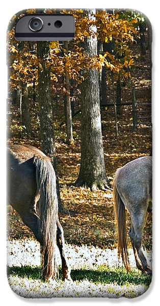 Horses in Autumn Pasture   iPhone Case by Susan Leggett