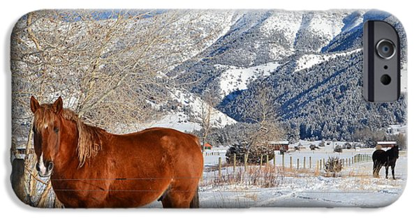 Winter Scene Jewelry iPhone Cases - Horses in winter iPhone Case by Anne Foster