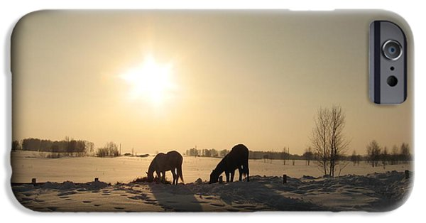 The Horse iPhone Cases - Horses in winter iPhone Case by Zina Stromberg