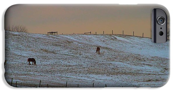 The Horse Photographs iPhone Cases - Horses On The Farm In Winter iPhone Case by Dan Sproul