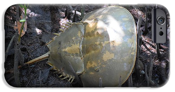 J N Ding Darling National Wildlife Refuge iPhone Cases - Horseshoe Crab iPhone Case by Curtis Krusie