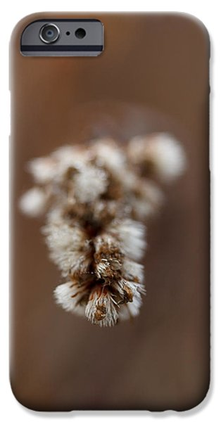 Macro iPhone Cases - Horsey Face iPhone Case by Shane Holsclaw