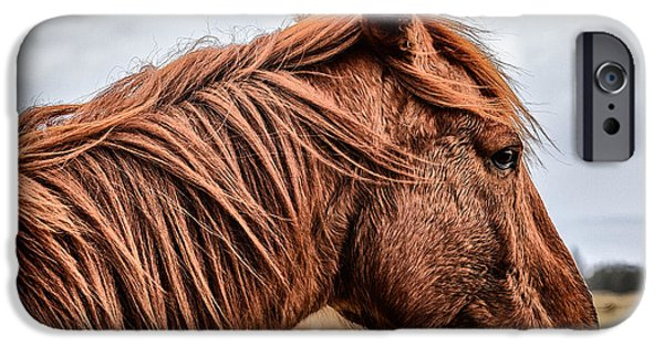 Horse Photographs iPhone Cases - Horsey horsey iPhone Case by John Farnan