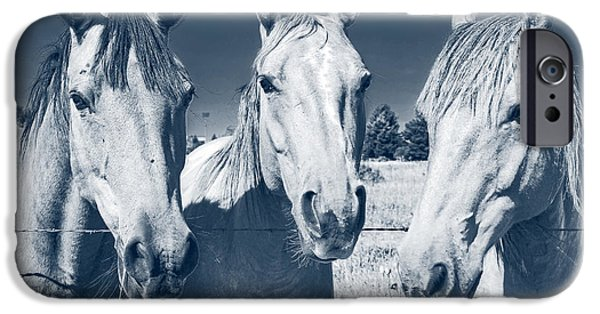 Trio Photographs iPhone Cases - Horsing Around iPhone Case by Edward Fielding