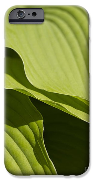 Business iPhone Cases - Hosta iPhone Case by Tony Cordoza
