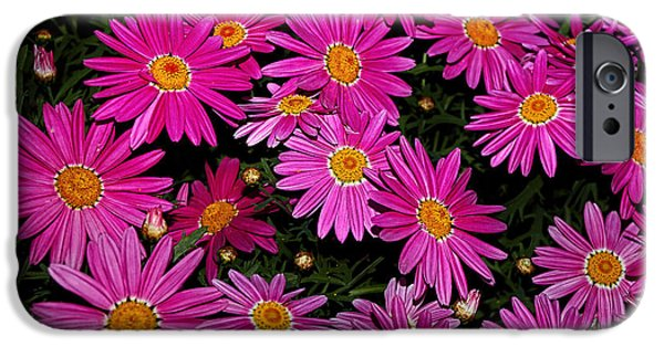 Daisy Bud iPhone Cases - Hot Pink Daisies iPhone Case by Kaye Menner