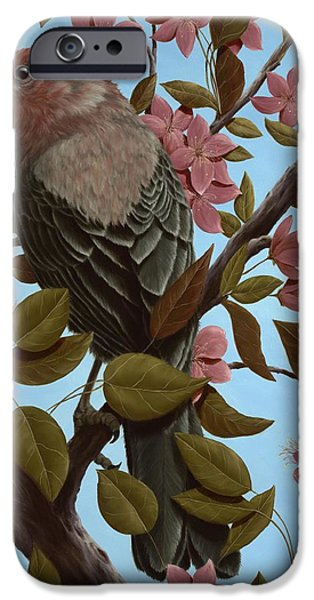 Finch iPhone Cases - House Finch iPhone Case by Rick Bainbridge