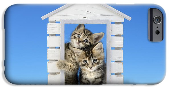 Shed Digital Art iPhone Cases - House of Kittens CK528 iPhone Case by Greg Cuddiford