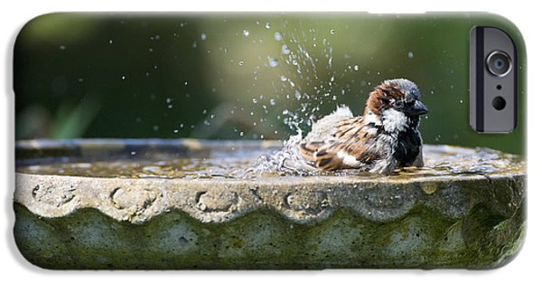 Bath iPhone Cases - House Sparrow Washing iPhone Case by Tim Gainey
