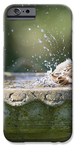 House Sparrow Washing iPhone Case by Tim Gainey