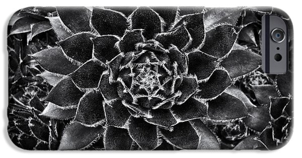 Hens iPhone Cases - Houseleek Monochrome iPhone Case by Tim Gainey