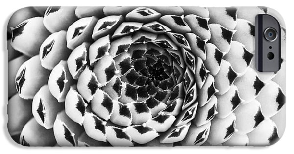 Chicks iPhone Cases - Houseleek Pattern Monochrome iPhone Case by Tim Gainey