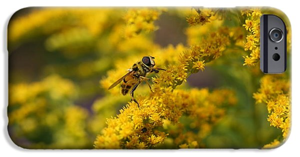 Fauna iPhone Cases - Hoverfly iPhone Case by Mark Severn