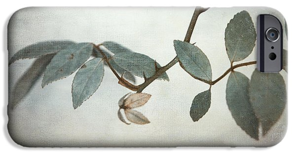 Vine Leaves iPhone Cases - How Delicate This Balance iPhone Case by Laurie Search