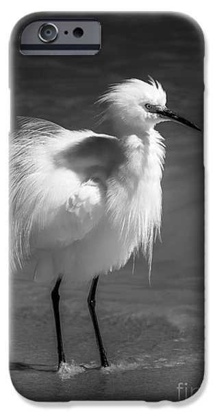 Snowy Egret iPhone Cases - How Do I Look- bw iPhone Case by Marvin Spates
