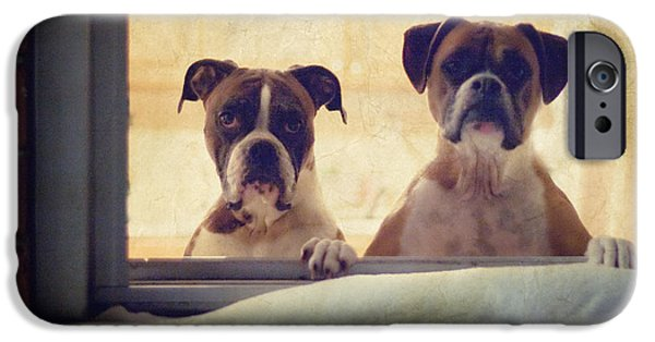Boxer Photographs iPhone Cases - How Much is that Doggie in the Window? iPhone Case by Stephanie McDowell