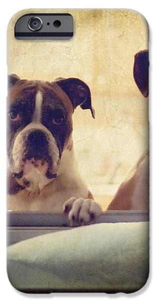 How Much is that Doggie in the Window? iPhone Case by Stephanie McDowell