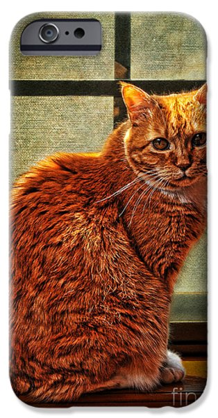 How Much is That Kitty in the Window iPhone Case by Karen Slagle