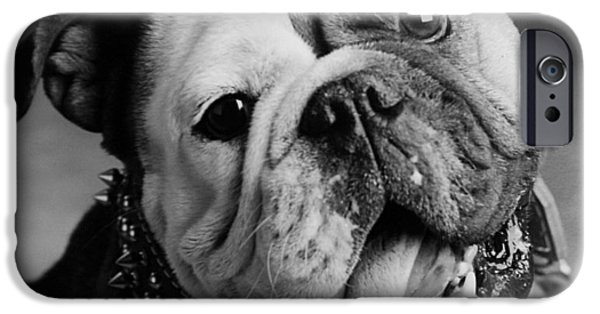 Bull Dog iPhone Cases - Huh iPhone Case by Jill Reger
